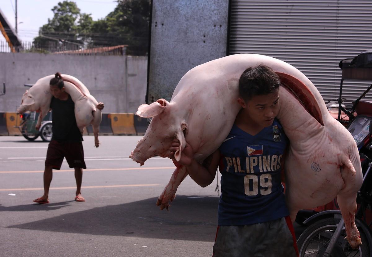 Dịch tả lợn châu Phi có thể bùng phát tại một số nước châu Á