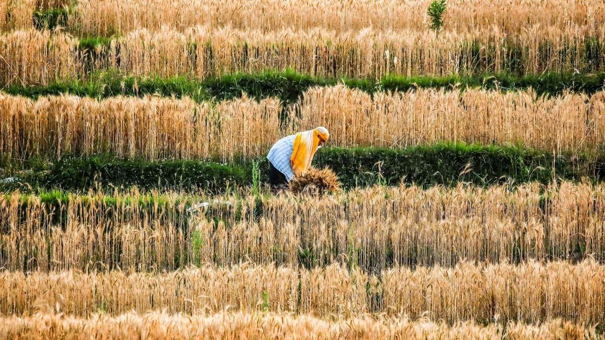 Yếu tố nào đang đẩy giá thực phẩm toàn cầu tăng chóng mặt?