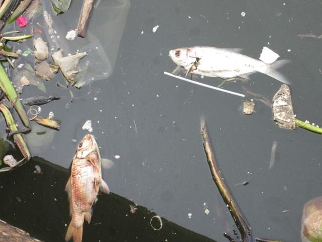 TPHCM: Cá chết nổi lềnh bềnh trên kênh Nhiêu Lộc – Thị Nghè