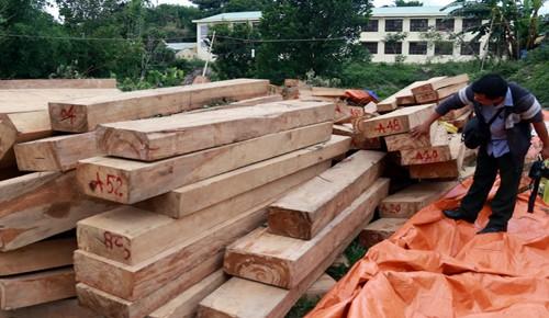 Hàng loạt cán bộ bị kỷ luật trong vụ phá rừng pơ mu ở Quảng Nam