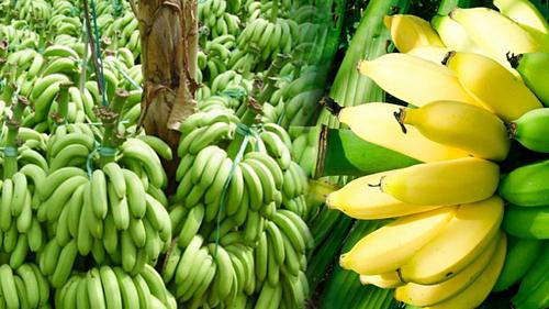 """Những loại trái cây """"sốt"""" giá nhờ Trung Quốc tăng mua"""