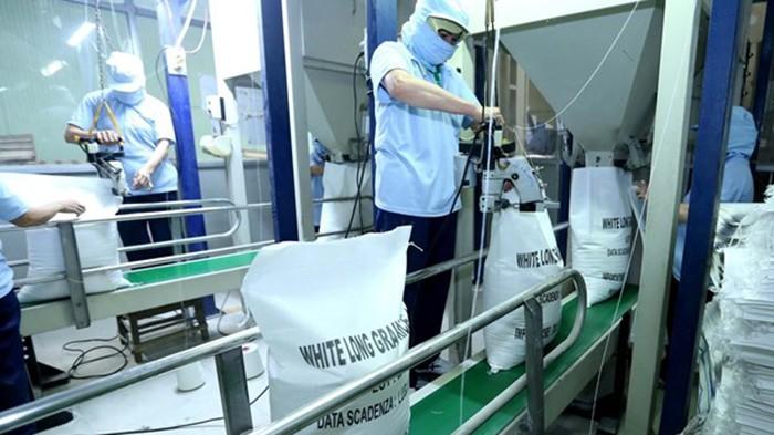 Số thương nhân tham gia xuất khẩu gạo tại Việt Nam liên tục tăng