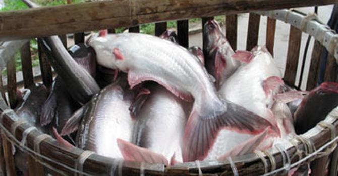 Kế hoạch 2019 đi lùi, Thủy sản Mekong sắp tăng vốn lên hơn 123 tỷ đồng