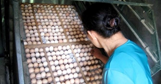 """Thị trường 24h: Quả trứng """"gánh"""" 14 loại phí, quả chanh """"đội giá"""" 100 lần"""