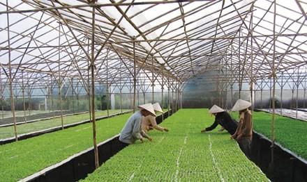 Nông nghiệp công nghệ cao: Làm gì để tạo gói 50-60 nghìn tỷ?