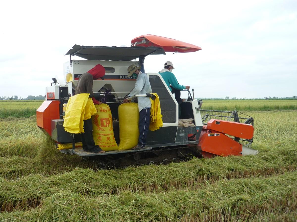 Giá lúa cao nhất trong lịch sử hơn 30 năm xuất khẩu gạo