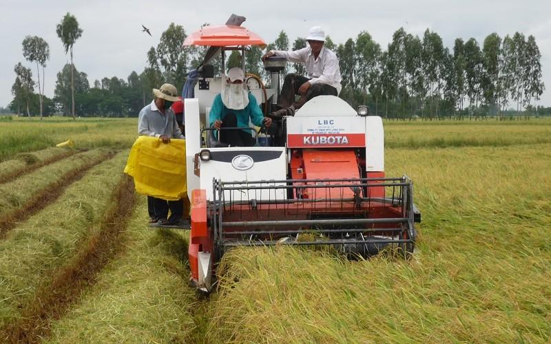 Nhu cầu nhập khẩu tăng mạnh, giá gạo sẽ vẫn giữ ở mức cao