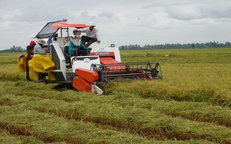"""Nông dân trồng lúa thoát được """"lời nguyền trúng mùa rớt giá"""""""