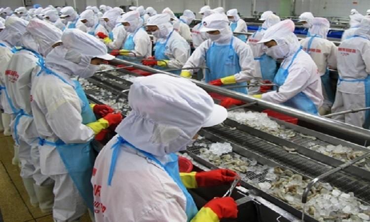 Xuất khẩu tôm: Khối CPTPP tiếp tục dẫn đầu, đột biến thị trường Nga