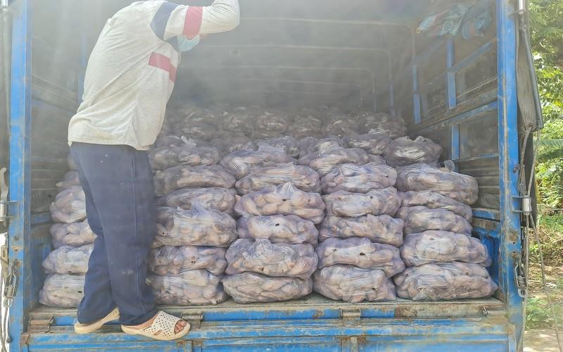 PVCFC chung tay giải cứu nông sản khu vực Miền Đông, Tây Nam Bộ