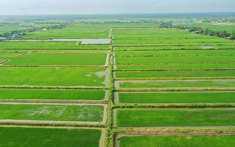 Canh tác lúa trên nền đất tôm: Mô hình sản xuất bền vững, sản phẩm an toàn phù hợp xu thế tiêu dùng