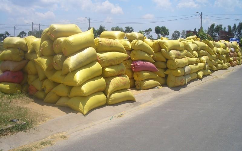 Nghẽn đầu ra, An Giang cùng doanh nghiệp lo giải pháp tiêu thụ gần triệu tấn lúa Hè Thu