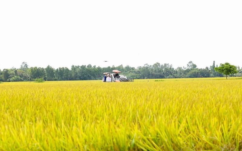 Tập đoàn Tân Long - tầm nhìn và mục tiêu phát triển gạo Việt