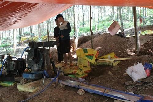 Đào vàng lậu ở Phú Riềng