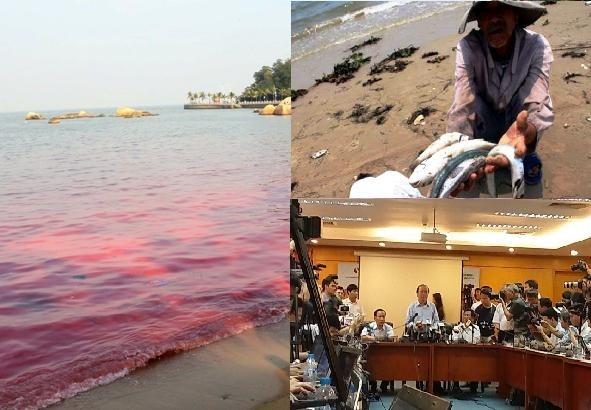 Hội nghề cá: Cá chết do chất độc, không phải do thủy triều đỏ!