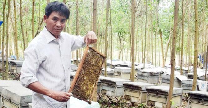 Thu tiền tỷ từ ong Ý