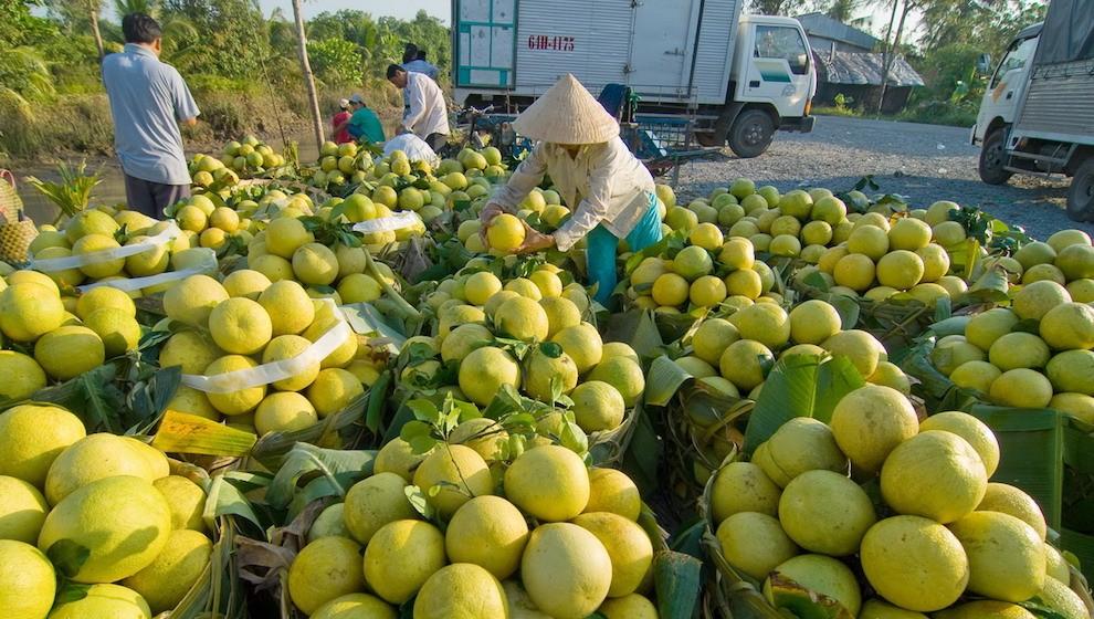Xuất khẩu rau quả 4 tháng đầu năm: Tăng đột biến sang Thái Lan không thể bù sụt giảm ở Trung Quốc