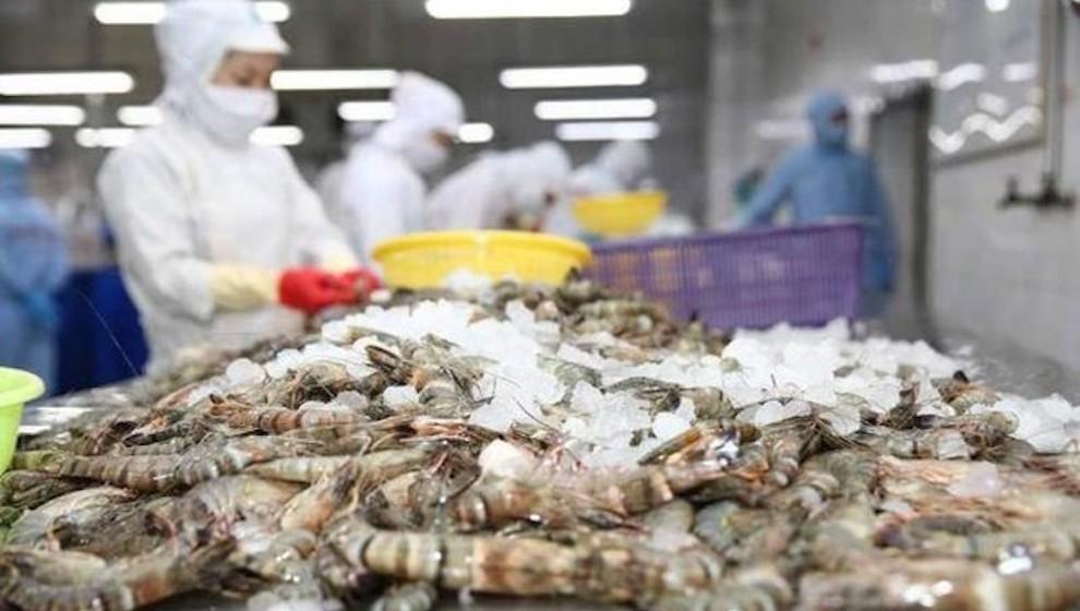 Xuất khẩu tôm sang EU tăng trưởng kỷ lục nhờ EVFTA