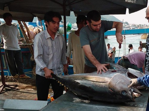 Xuất khẩu cá ngừ sang Nhật Bản còn nhiều khó khăn
