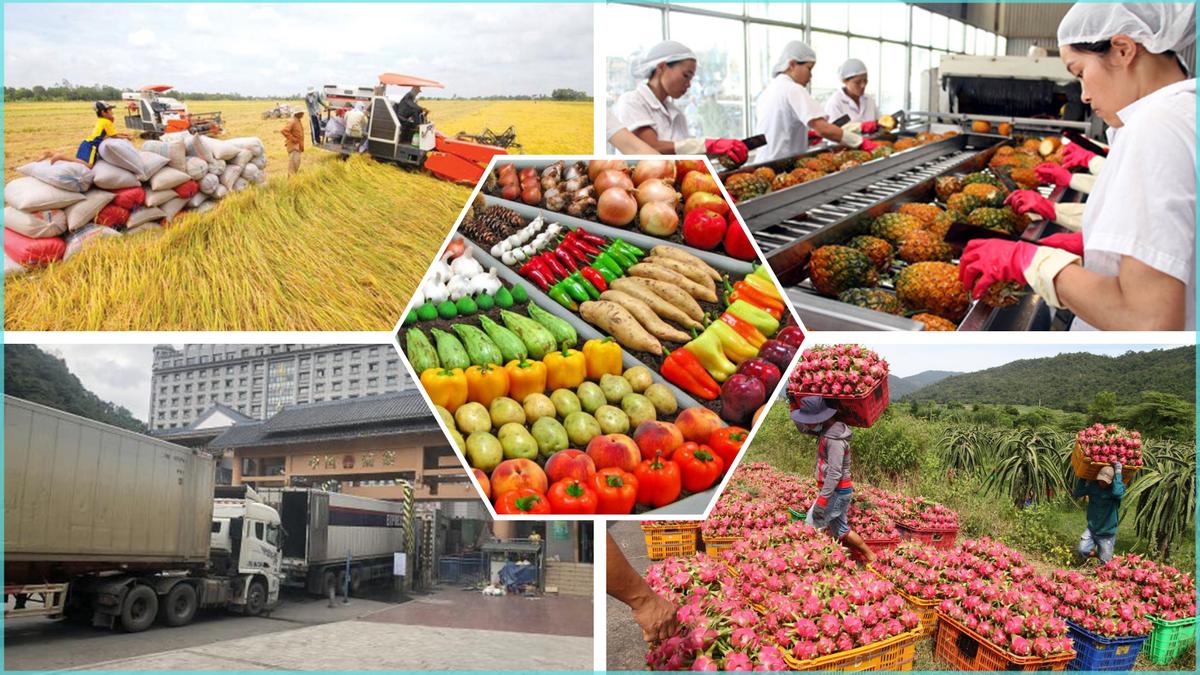 Chính phủ chỉ đạo tạo điều kiện nhất cho sản xuất, lưu thông, xuất khẩu nông sản