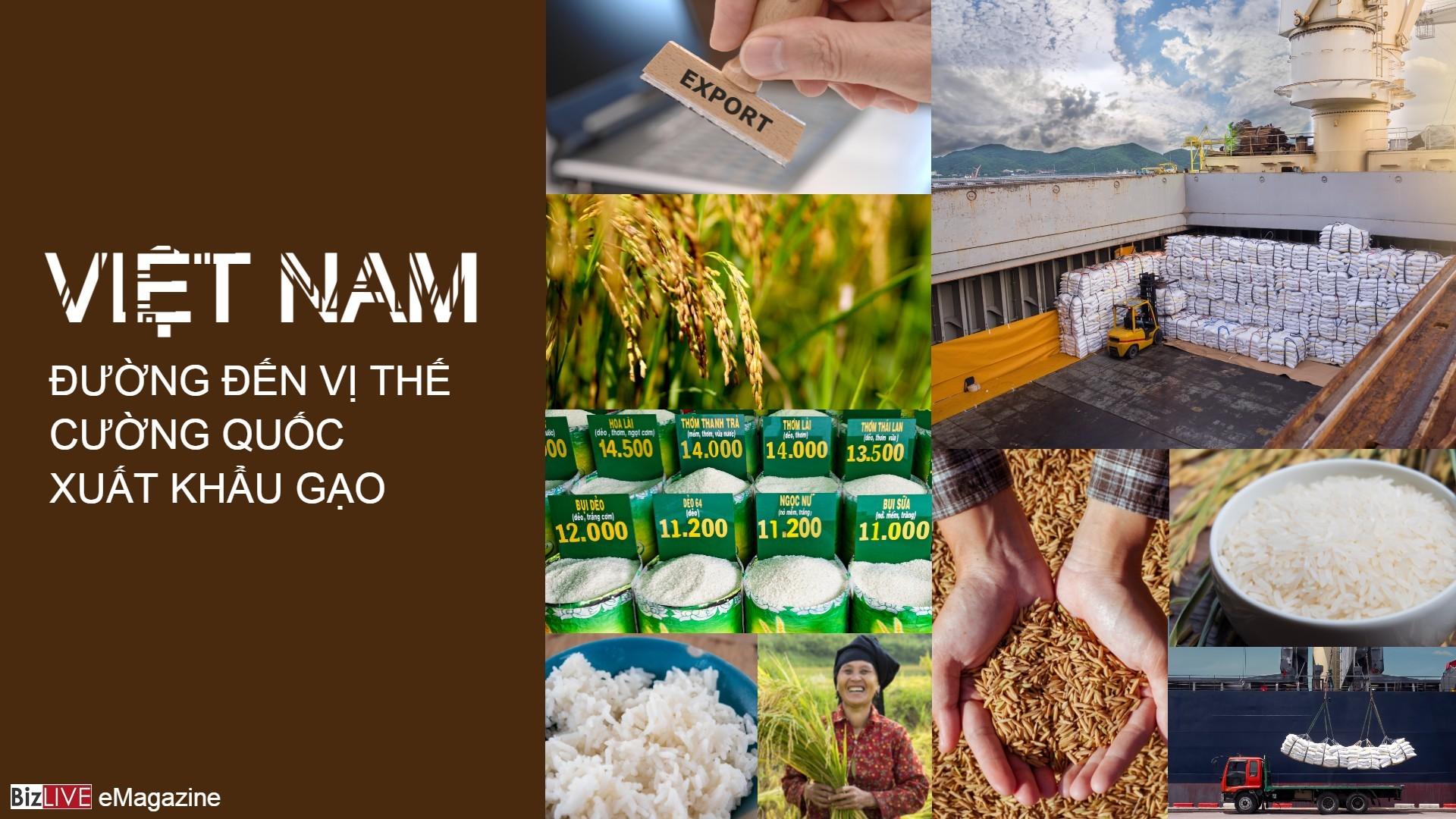 Việt Nam - Đường đến vị thế cường quốc xuất khẩu gạo