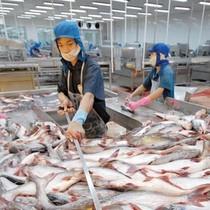 Thủy sản Hùng Vương (HVG) lỗ 84 tỷ đồng quý cuối niên độ, lỗ lũy kế hơn 600 tỷ đồng
