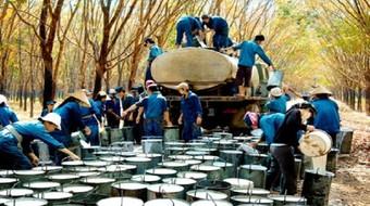 Kim ngạch xuất khẩu cao su tăng mạnh nhờ giá
