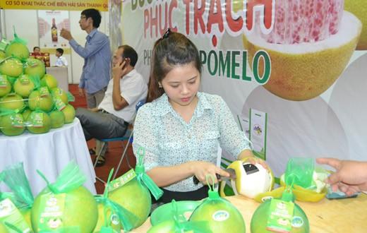 Sản phẩm bưởi Phúc Trạch, huyện Hương Khê, Hà Tĩnh đã được đăng ký bảo hộ chỉ dẫn địa lý.
