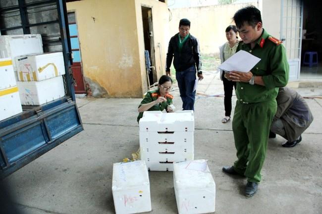 Bắt giữ 3 xe tải chở đầy dâu tây Trung Quốc đưa lên Đà Lạt - Ảnh 1.