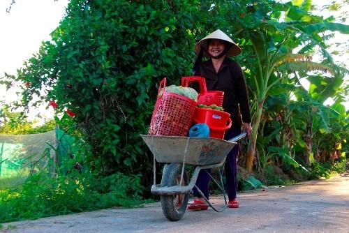 Người dân làng Hương Cần chở quýt về nhà. Ảnh: Võ Thạnh