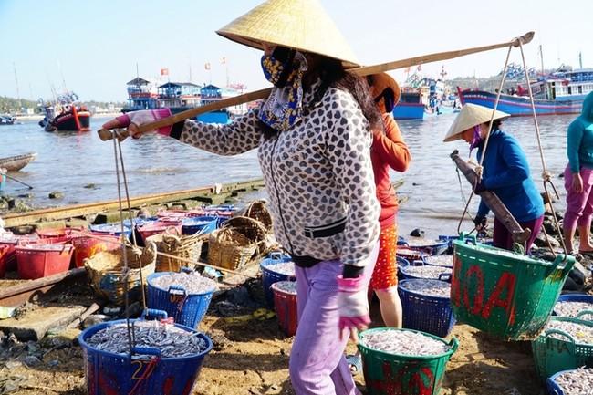 Ngư dân thu hơn 50 triệu đồng sau đêm đánh cá cơm đầu năm