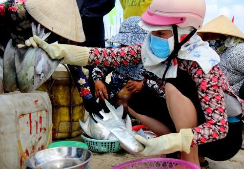 Cá được thương lái mua tại bãi biển để xuất đi Trung Quốc, Hàn Quốc. Ảnh: Nguyễn Khoa.