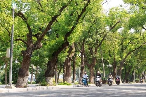 Cây xanh đường phố là nét đặc trưng ở thành phố Huế. Ảnh: Võ Thạnh