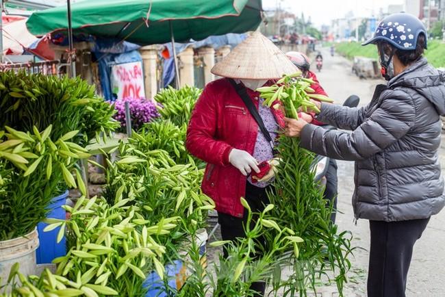 Người trồng hoa Hà Nội lâm cảnh 'hoa cười người khóc' - ảnh 9