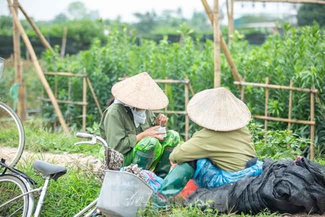 Người trồng hoa Hà Nội lâm cảnh 'hoa cười người khóc' - ảnh 5