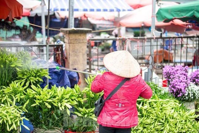 Người trồng hoa Hà Nội lâm cảnh 'hoa cười người khóc' - ảnh 10