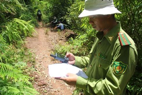 """Hiện trường vụ phá rừng Pơmu ở biên giới Việt – Lào: """"Quá khủng khiếp!"""" 7"""