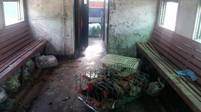Bao nhiêu năm nay, tàu chỉ chở gà, vịt và rau, củ, quả. Ảnh: Nguyễn Hùng
