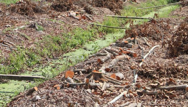 Nông nghiệp Bến Tre mất hơn 1.223,45 tỷ đồng do hạn mặn