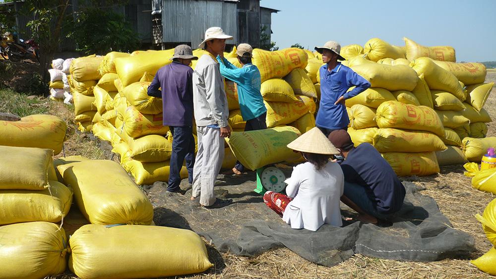 Philippines không còn theo đuổi kế hoạch nhập khẩu 300.000 tấn gạo G2G