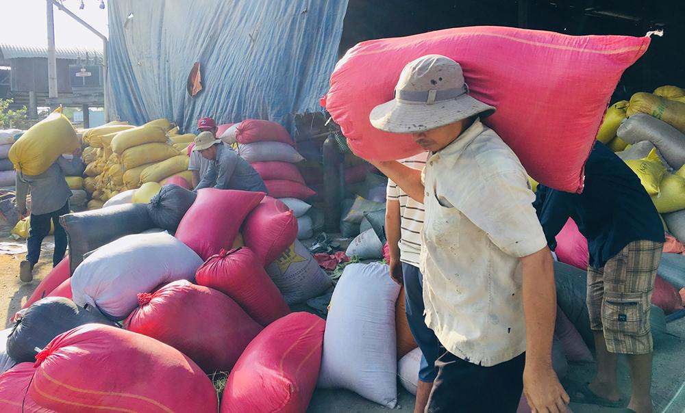 """Nhà nhập khẩu """"đè"""" giá, gạo Việt Nam phải tính đường dài"""