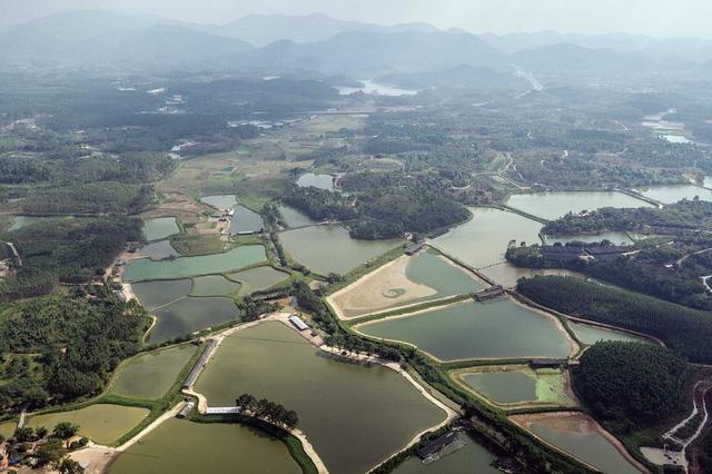 Một khu vực chăn nuôi thủy sản tại Quảng Đông