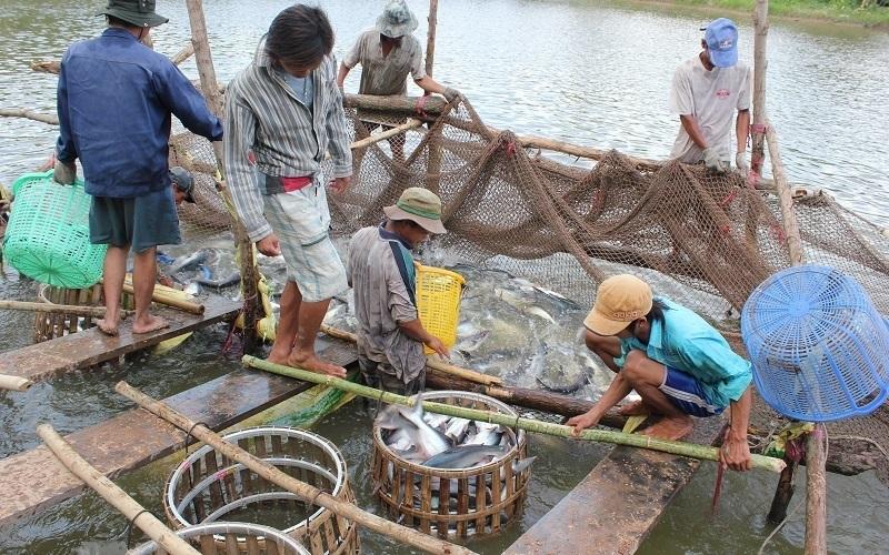 Xuất khẩu nông lâm thủy sản tăng tốc ngay từ các tháng đầu năm
