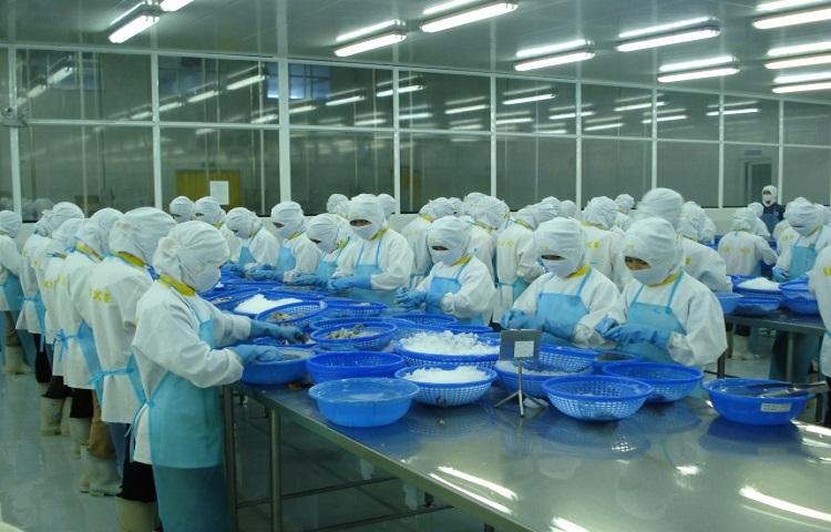 Khối CPTPP đang dẫn đầu thị trường tôm Việt Nam