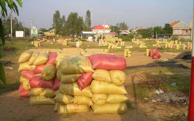 Khuyến khích doanh nghiệp trong tỉnh thu mua hết lúa của nông dân