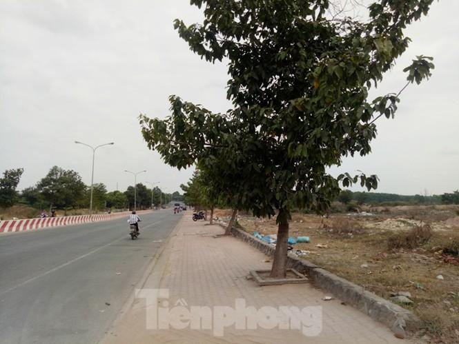 Cận cảnh khu đất khiến lãnh đạo Cty Thiên Phú bị bắt - ảnh 3