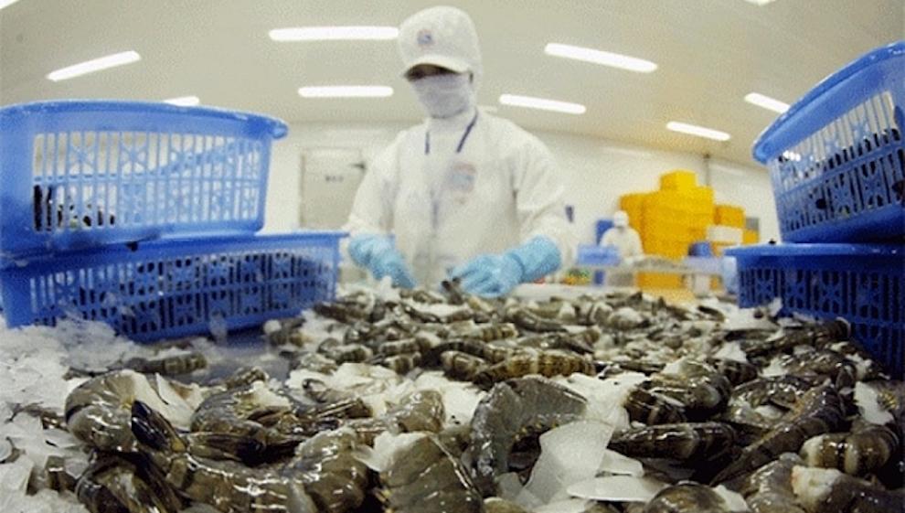Ít nhất 17 nguồn xuất tôm sang Mỹ bị giảm, cơ hội cho Việt Nam