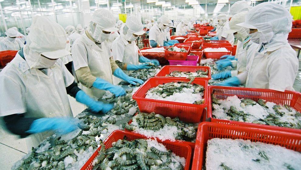 Tôm Việt Nam bị cạnh tranh gay gắt với Ấn Độ tại thị trường Nhật Bản