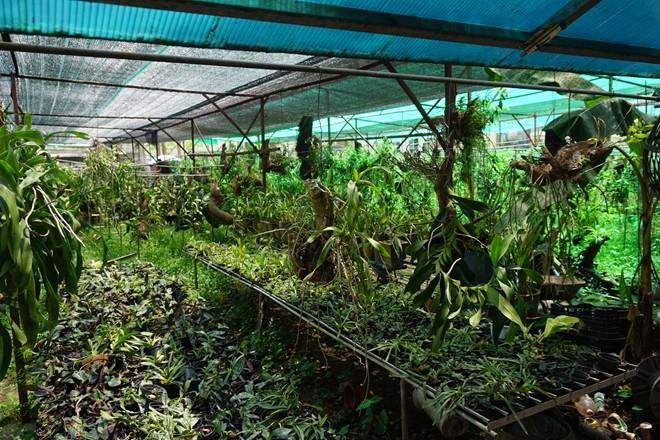 vườn cây cảnh, vườn lan, hoa lan, lão nông, vườn đào, cây ngũ quả