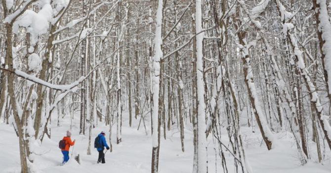 """Du lịch Nhật Bản mùa đông: Đừng bỏ qua """"thiên đường"""" trượt tuyết Fukushima"""